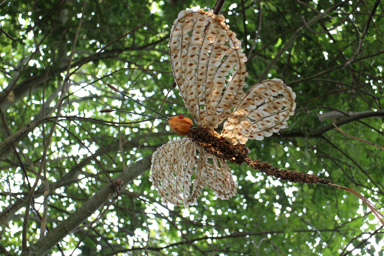 Caddis mayfly